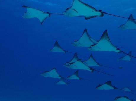 saipan-diving-spots