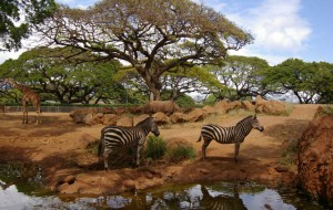 honolulu-zoo
