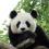 フランスで唯一パンダに会えるボ-ヴァル動物園