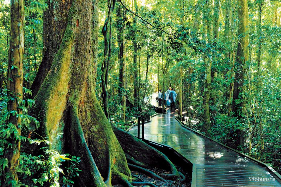 オーストラリア【ラミントン国立公園】で古代植物に会いに行く